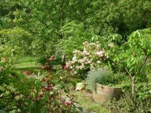 Food-forest-garden-1500×1125